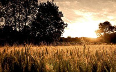 Spreuken: Tijdloze wijsheid voor een leven van zegen